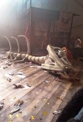 dead dog skeleton